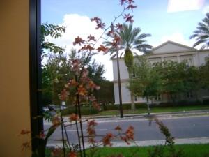 Top Florida real estate lawyer